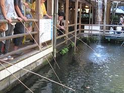 マス釣り人気②